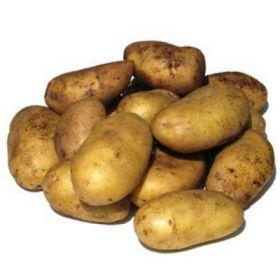 Картофель (молодой)