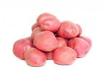 Картофель молодой (розовый)