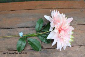 Георгин розовый