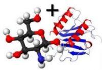 Глюкозамин+хондроитин сульфат (1:1) 100г Wirud (Германия)