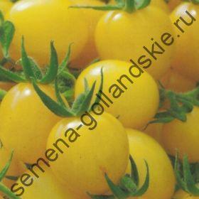 """Томат сорт """"ЗОЛОТОЙ САМОРОДОК"""" (Gold Nugget)  10 семян"""