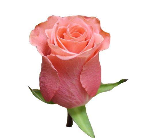 """Роза """"Декора"""" 60 см."""