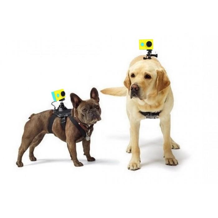 Крепление на животных для экшн-камеры