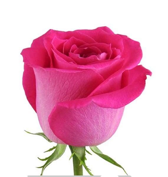 "Роза ""Топаз"" 70 см."