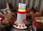 Кормушка улучшенная усиленная на 10 кг для сельхоз птицы.Оптом.