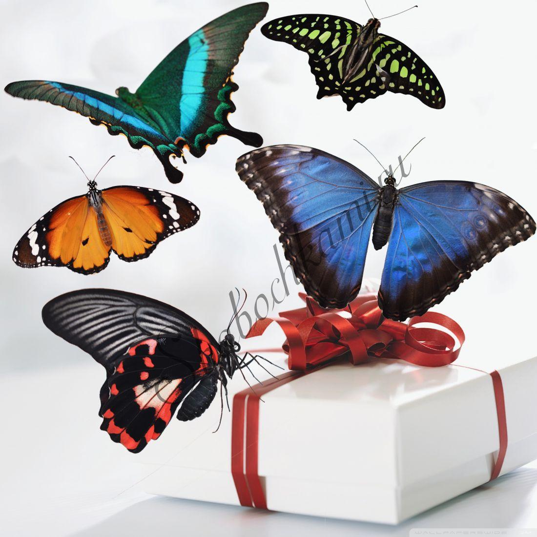 Коробка бабочек «Премиум-5»