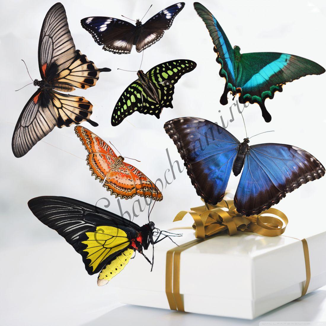 Коробка бабочек «Премиум-7»
