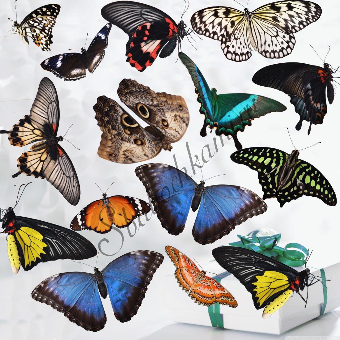 Салют из бабочек «Премиум-15»