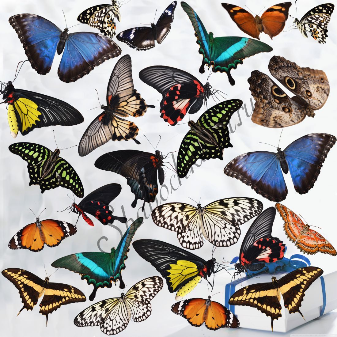 Салют из бабочек «Премиум-25»