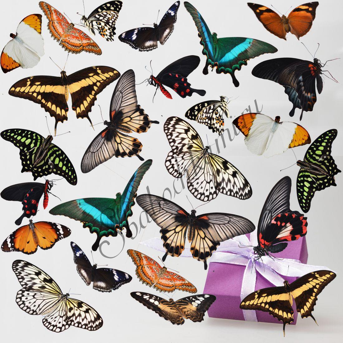 Салют из бабочек «Стандарт-25»