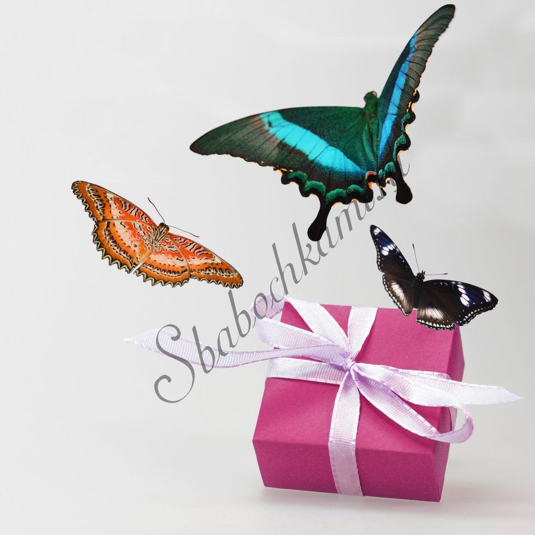 Бабочки в коробке «Стандарт-3»