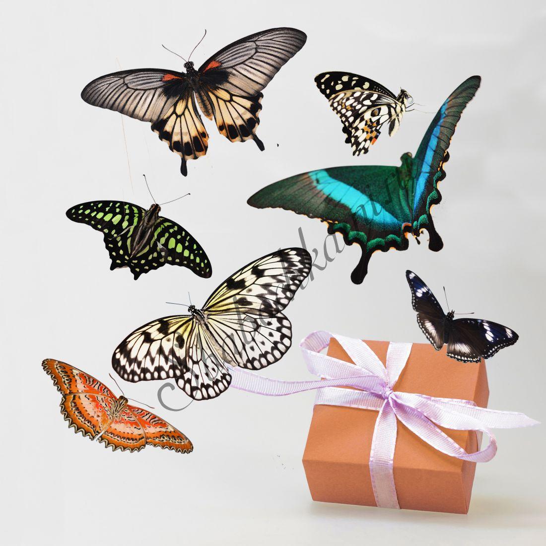 Бабочки в коробке «Стандарт-7»