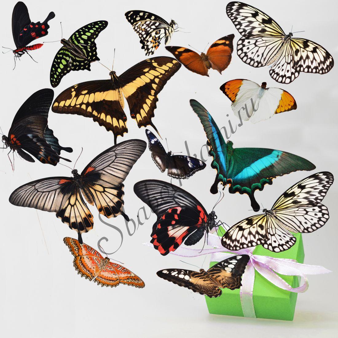 Салют из бабочек «Стандарт-15»