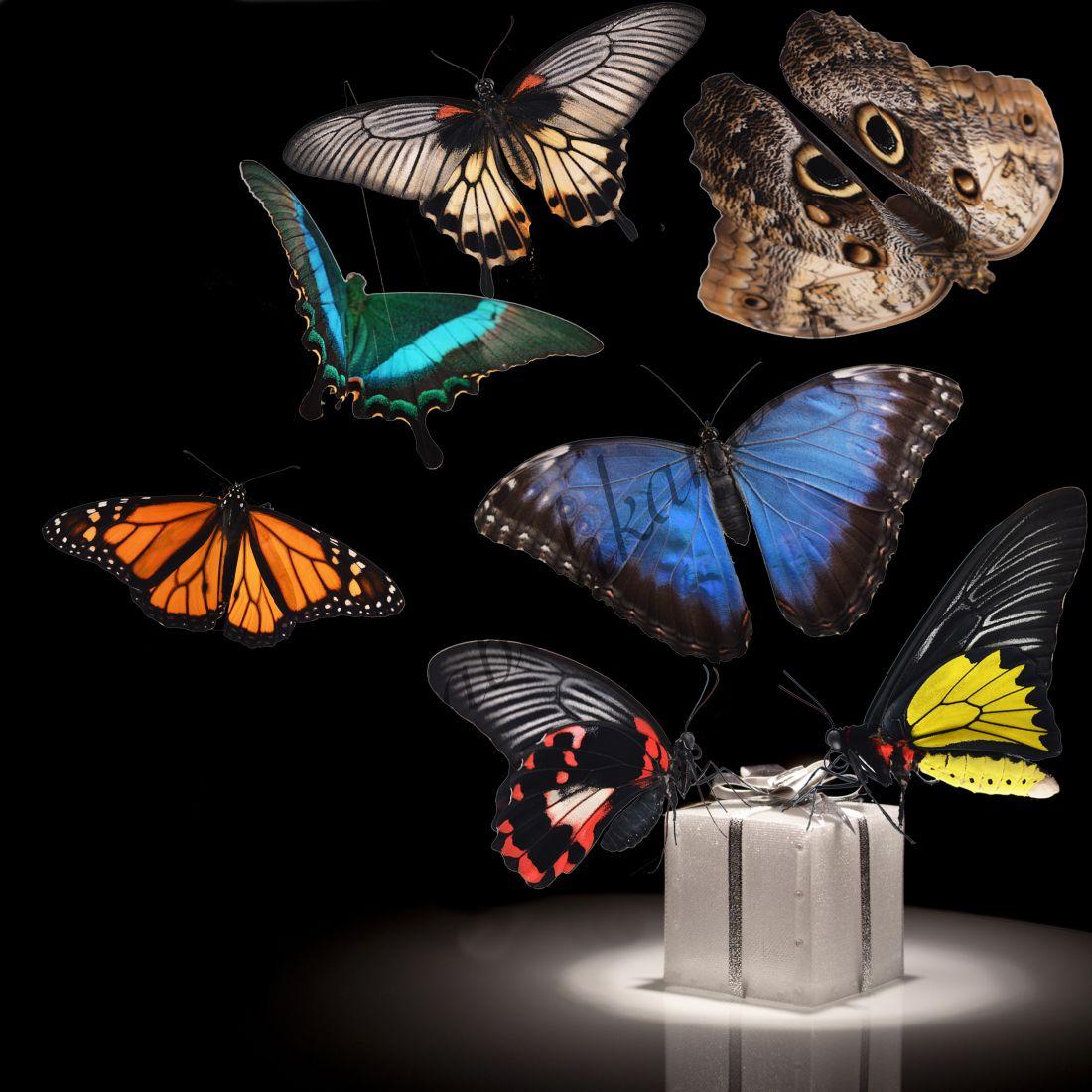 Бабочки в подарок «Люкс-7»