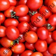 "Томат ""СУБАРКТИЧЕСКОЕ ОБИЛИЕ"" (Sub Arctic Plenty) 10 семян"