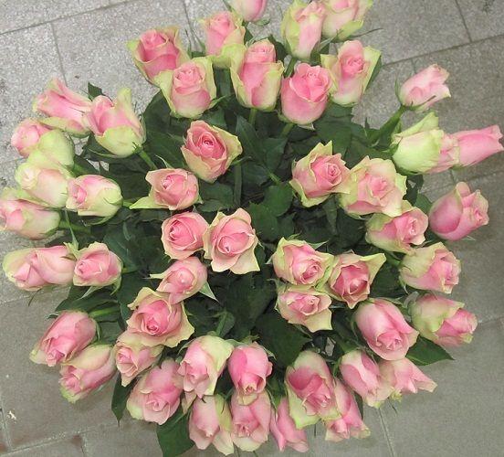 41 роза