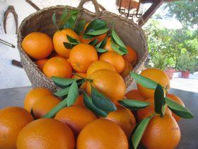 Апельсины (Испания)