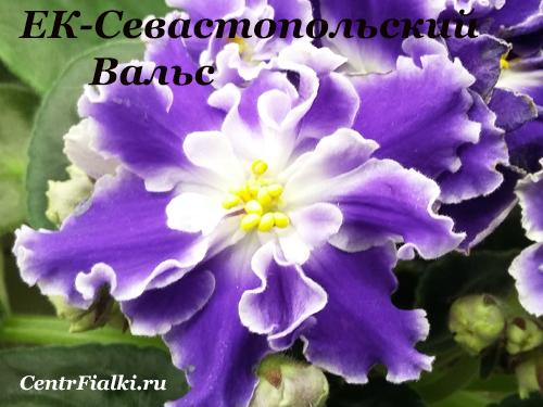 ЕК-Севастопольский Вальс (Е.Коршунова)