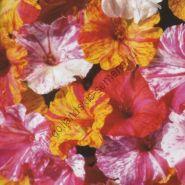 """Мирабилис  сорт """"РАЗБИТЫЕ ЦВЕТА"""" (Broken Colours)   1.5 гр.  20 семян"""