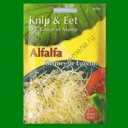 Проростки  ЛЮЦЕРНА    (Alfalfa)   20 грамм