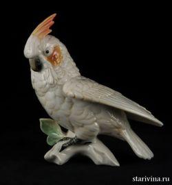 Попугай белый какаду, Karl Ens, Германия
