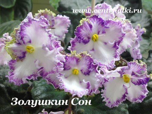 Золушкин Сон (Дейкун)