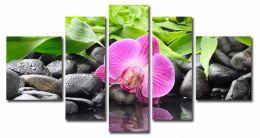 орхидея на камнях 2