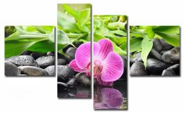 Прекрасная орхидея