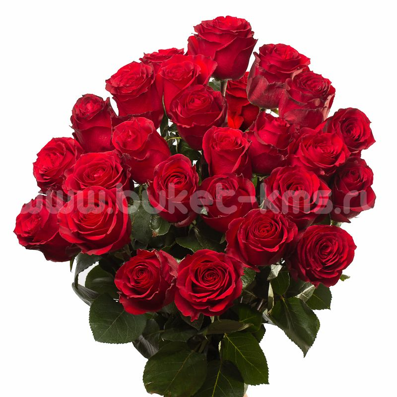 """Букет из 25 роз """"Секси Ред"""" c доставкой в Комсомольске"""