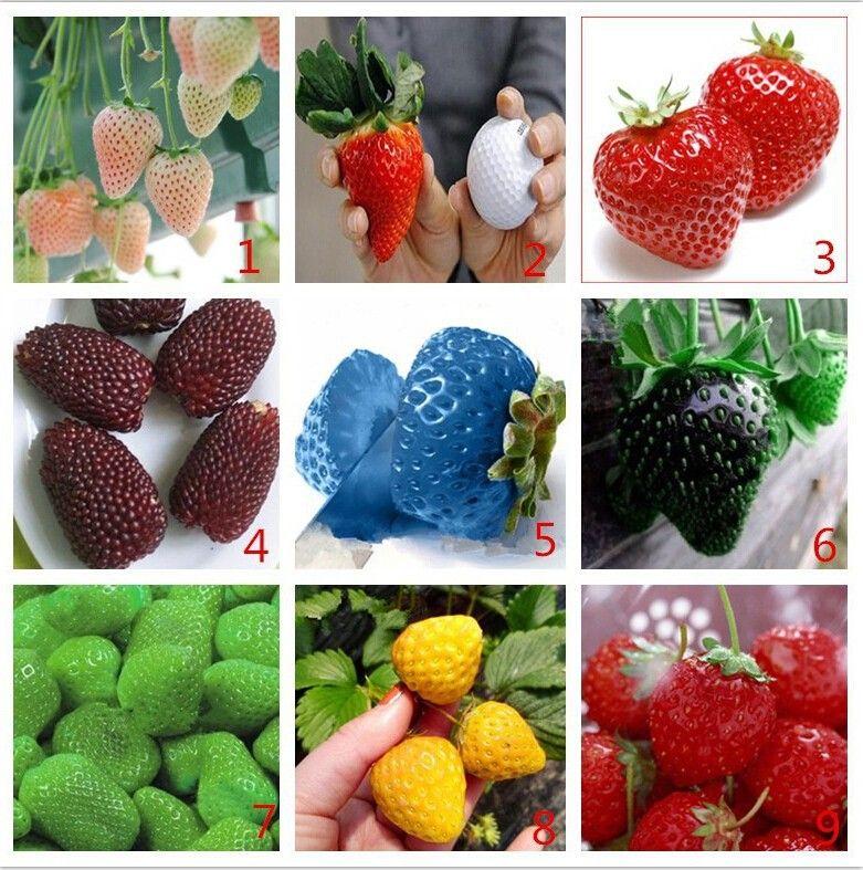 картинки цветов разных цветов