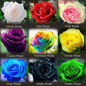 Семена самых необычных роз мира, 450 шт.
