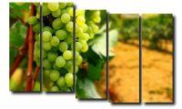 Модульная картина Фрукты. Виноград