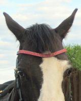 """Налобные ремни """"Horse Comfort"""" со стразами"""