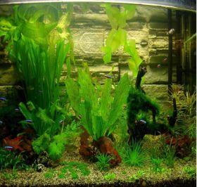 Семена аквариймных растений 15 видов, смесь 300 шт.