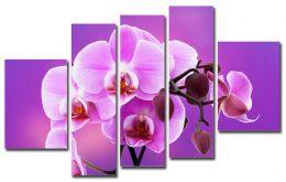 Орхидея на сиреневом фоне
