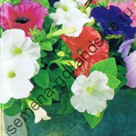 """Петуния сорт """"КАРЛИКОВЫЙ МИКС"""" (Petunia dwerg mix)  10 семян"""