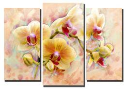 орхидея рисунок