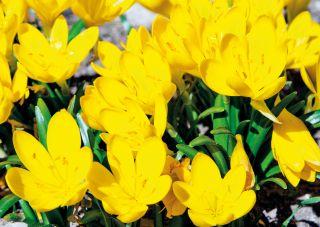 Почтовая открытка Весна