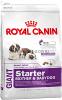 Royal Canin Giant Starter для щенков в период отъема до 2-месячного возраста