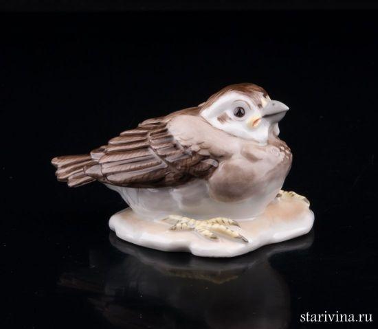 Изображение Птенчик воробья, Augarten Wien, Австрия