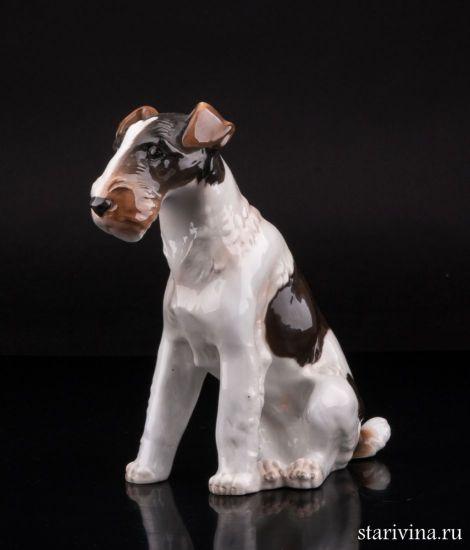 Фарфоровая статуэтка Фокстерьер производства Von Schierholz, Plaue, Германия,