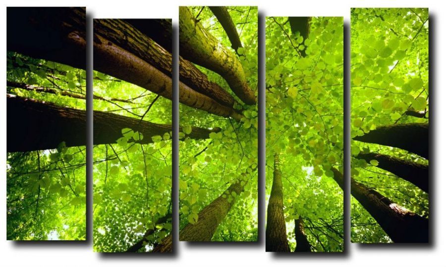 Модульная картина Летний лес