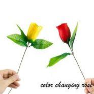 Роза меняет цвет