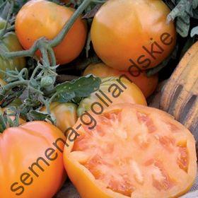 """Томат """"АПЕЛЬСИНОВЫЙ КОРОЛЬ БИО""""(Orange King BIO) 10 семян"""