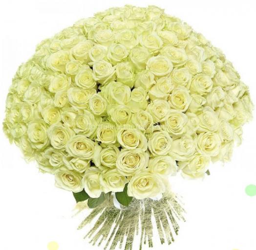51 и 101 белая роза 60 см.