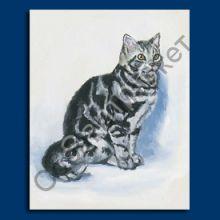 Британская короткошерстная кошка магнит США