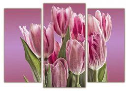 лепестки тюльпана