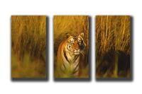 Модульная картина Бенгальский тигр