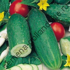 """Огурец """"ДЕЛИКАТЕС"""" (Delikatess) 10 семян"""