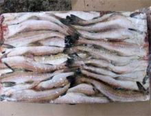 Минтай морской без головы тушка 30 см Мурманск от 12 кг